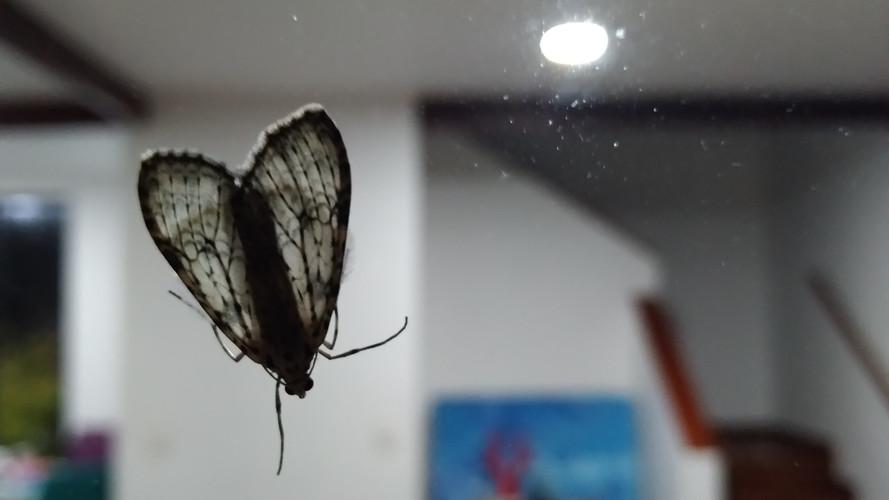 Mariposa extraña