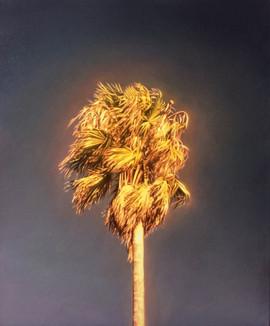 'Palm'(Preston)