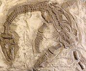 Палеопарк. Динозавры