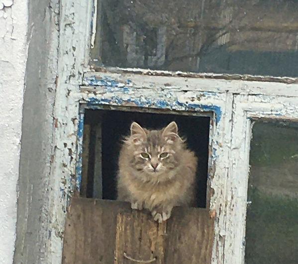кошки4_edited.jpg