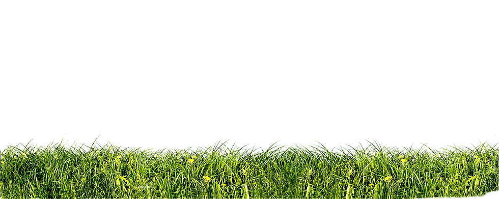 close-up-of-fresh-grass_edited.png