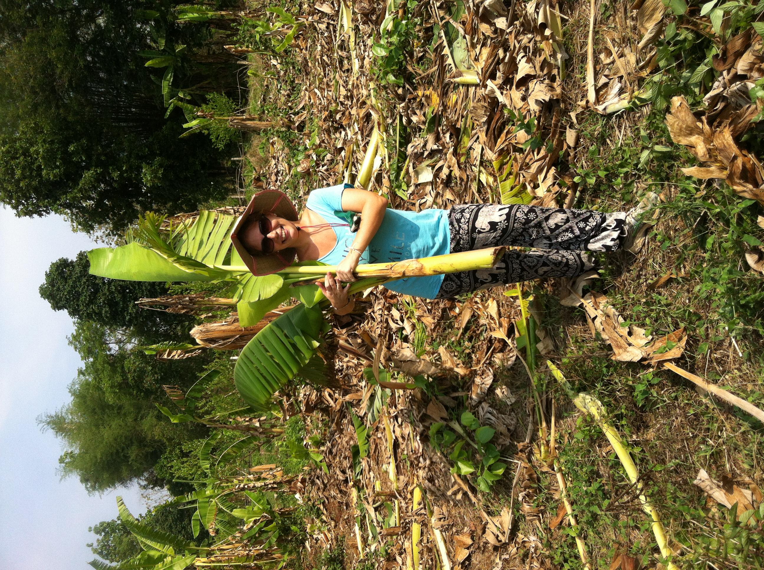 Elefánt farm, önkéntes munka