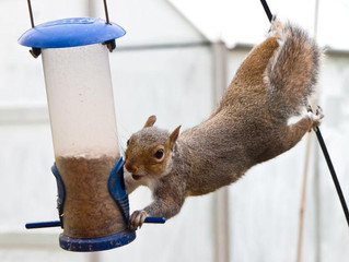 Human vs. Squirrel: The Battle of Wits Is On