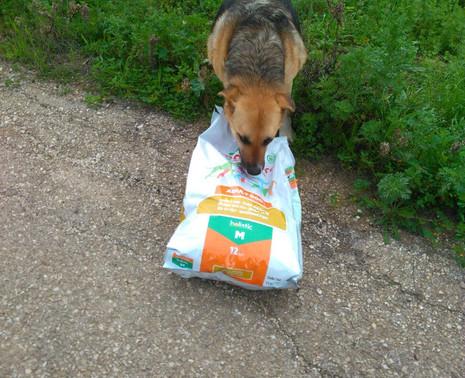 #Consegna5 2 cani di quartiere