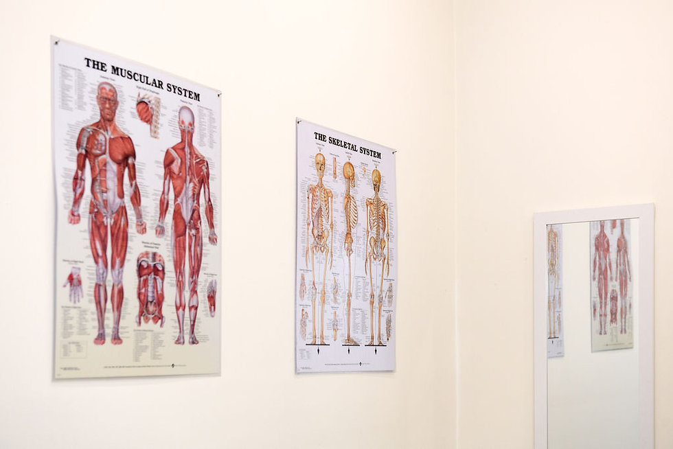 Muscular and Skeletal System Diagrams