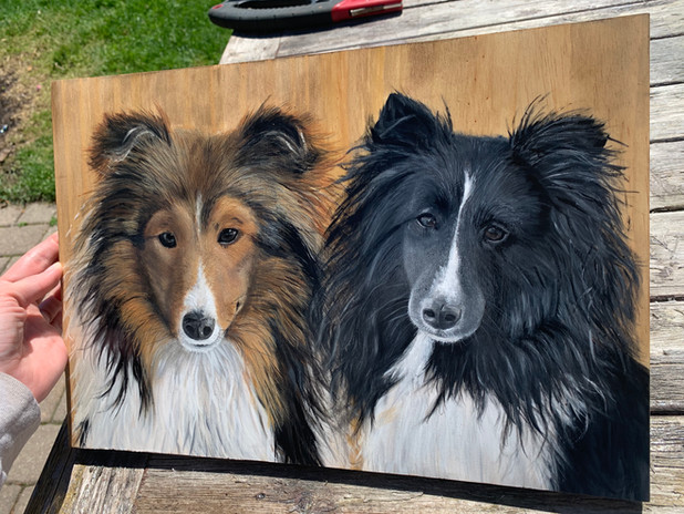 Collie Painting