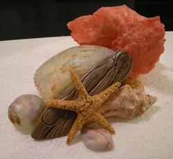 Sea Shells Sugar Piece