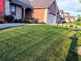 Grass 4.jpg