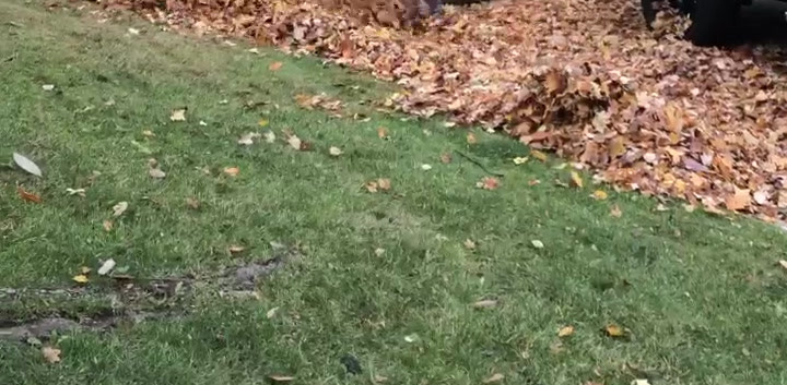 Fall Cleanup Haul Away Timelaps