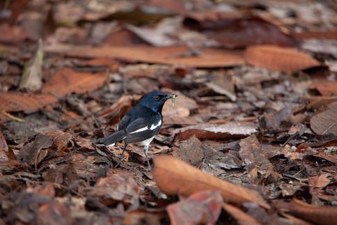 Nature and wildlife Str DRP36.jpg