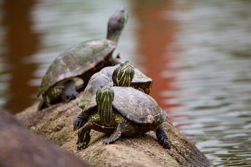 Nature and wildlife Str DRP25.jpg