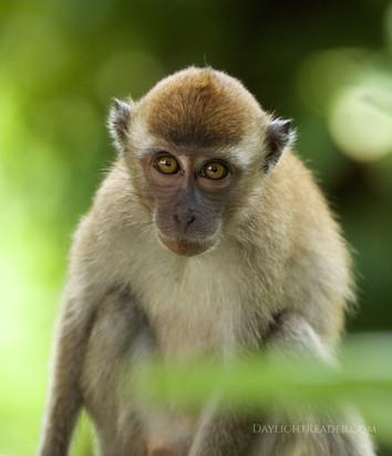 Intense monkey wk.jpg