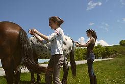 Tresses chevaux