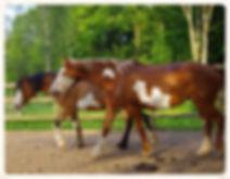 Thunder Bull, nokota horse type ranch