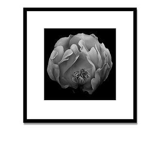 1 TATO flor con marco + arriba.jpg