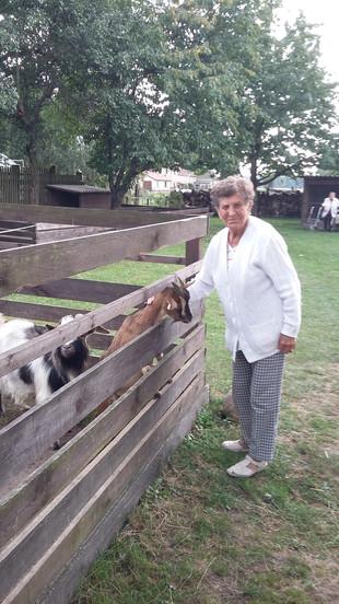 Ausflug zur Tierfarm