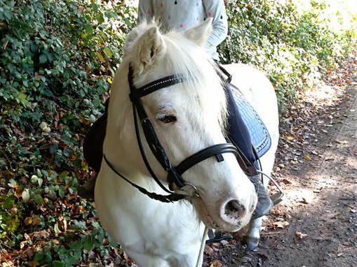 Pony-Ausritt