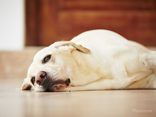 Cystitis: Causes & Treatments in Dogs