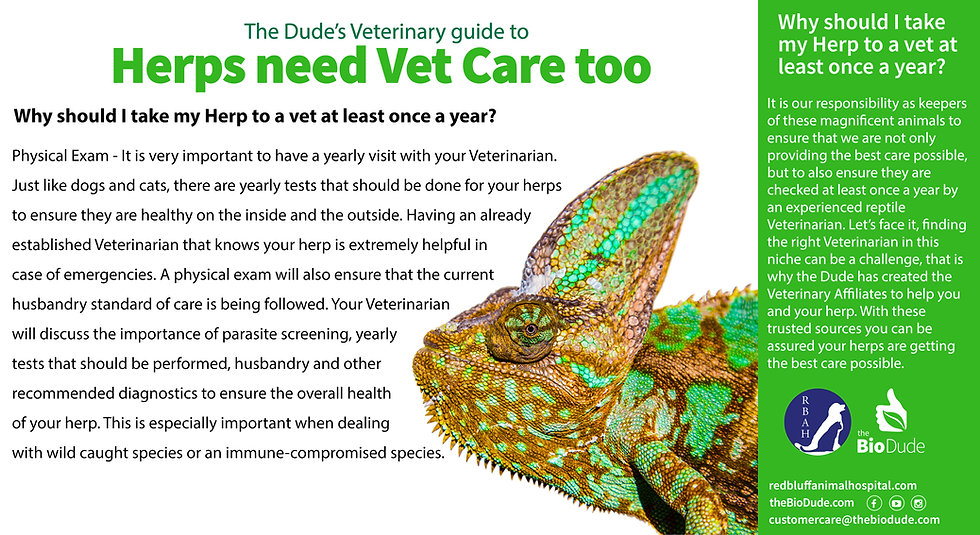 The-Dude's-Guide-to-Vet-Care2-EDITED.jpg