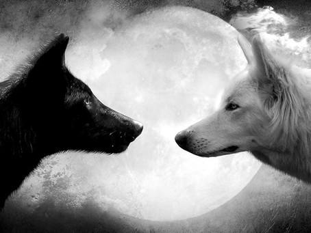 Yoga du Cœur : La fable des deux loups