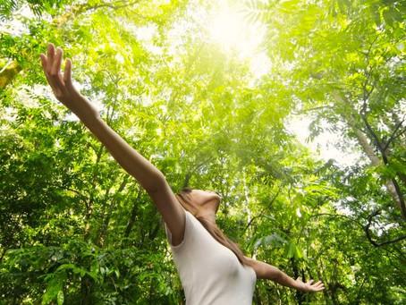 Yoga Nidra #2 «Balade ressourçante en forêt»
