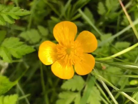 Yoga du Cœur #1 : Médit'action de la fleur à 5 petales