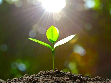 Hatha Yoga #13 «Séance de printemps»