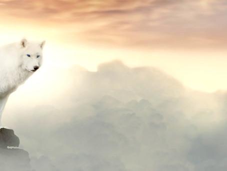 Yoga du Cœur : Mon loup blanc