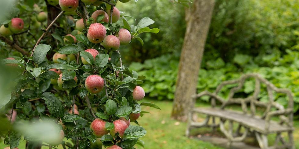 Tour the Gardens at 900 Waukegan