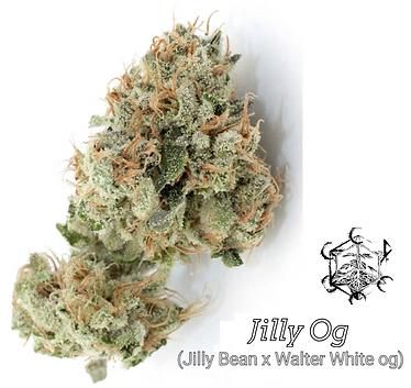 Jilly Bean x Walter White Og