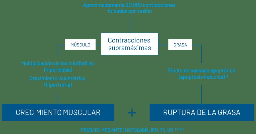 msculpt-contracciones-supramaximas.png