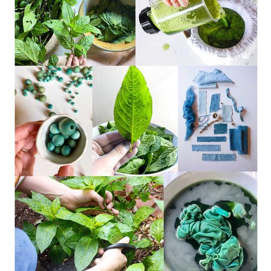 Indigo collage.jpg