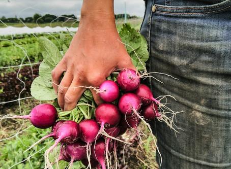 Feature: Catena Farm