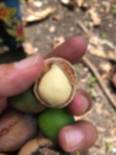 White nut.jpg