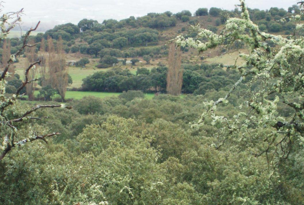 Valle del arroyo Nuncal.