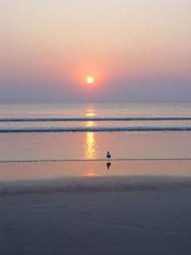 Ocean sunrise bird.jpg