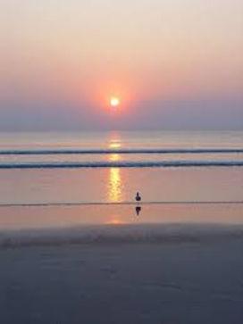 Ocean sunrise bird.jpg