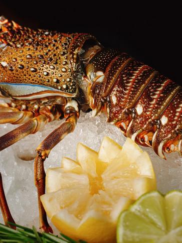 Rock lobster_m.jpg