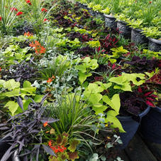 Foliage planters - April 2nd