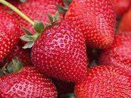 Strawberry (Fragaria)