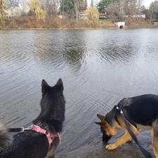 dogs on a walk near the water