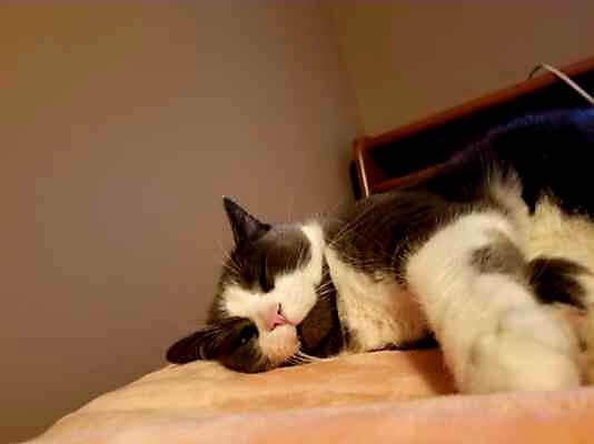 cat napping at priority pets.jpg