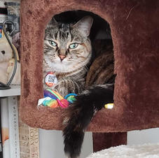 Cat relaxing in cat tree.