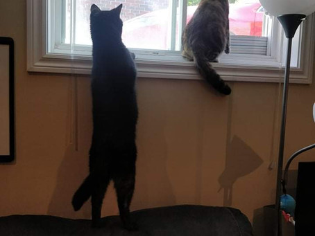 Thought I saw some little birdies!