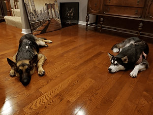 dogs nice and tired.png