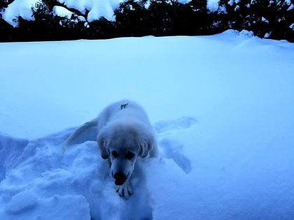 puppy playing in the snow.jpg