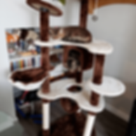 The kitties testing out the cat tree.png