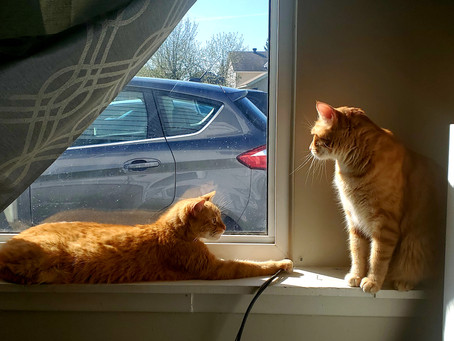 Two orange tabby cats they could be twins