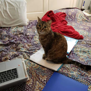 Cat trying to help brianna study