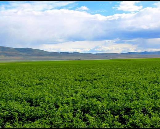 farm pic 1.jpg